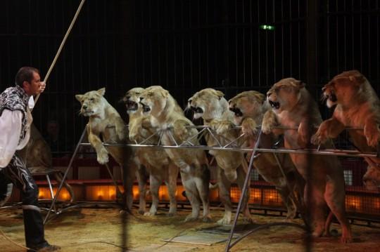circo leones